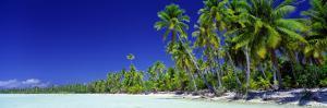 Beach with Palm Trees, Bora Bora, Tahiti