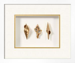 Beachcomber Shell Trio Shadowbox - Gold