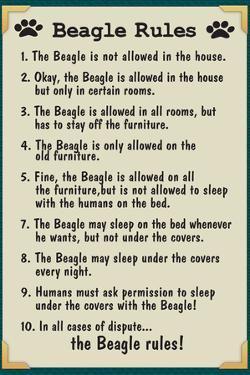 Beagle House Rules Humor