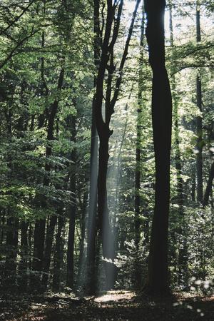 https://imgc.allpostersimages.com/img/posters/beam-of-light-in-the-spring-wood_u-L-Q1EXMW60.jpg?artPerspective=n