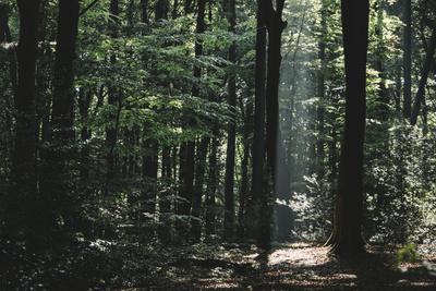 https://imgc.allpostersimages.com/img/posters/beam-of-light-in-the-spring-wood_u-L-Q1EXO5K0.jpg?artPerspective=n