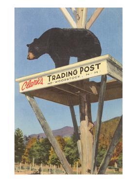 Bear, Clark's Trading Post, Woodstock, New Hampshire