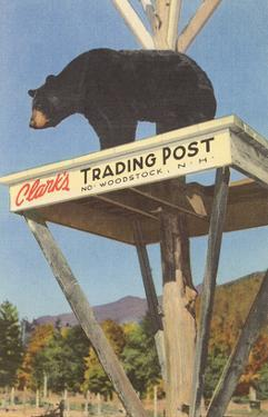 Bear, Clark's Trading Post, Woodstock, New Hampshire
