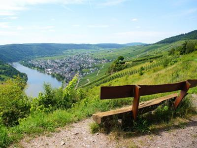 View Bench Near Kröv on the Moselle