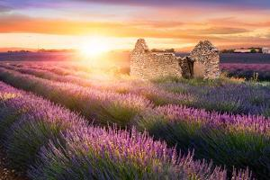 Sun Is Setting over a Beautiful Purple Lavender Filed in Valensole. Provence, France by Beatrice Preve