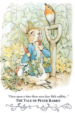 Beatrix Potter Tale Peter Rabbit by Beatrix Potter