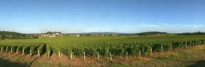 Beaujolais Vineyard, Jully-Les-Buxy, Saone-Et-Loire, Burgundy, France