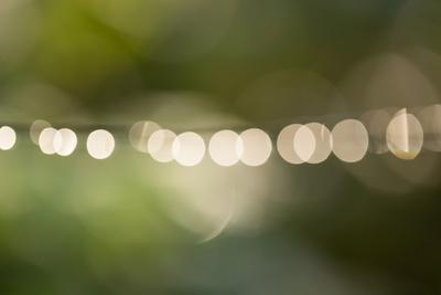 https://imgc.allpostersimages.com/img/posters/beautiful-bokeh-nature-light-with-green-background_u-L-Q1EXXWV0.jpg?artPerspective=n