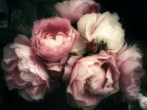 Beautiful Bouquet of Pink Rose Flowers on a Dark Background, Soft and Romantic Vintage Filter, Look