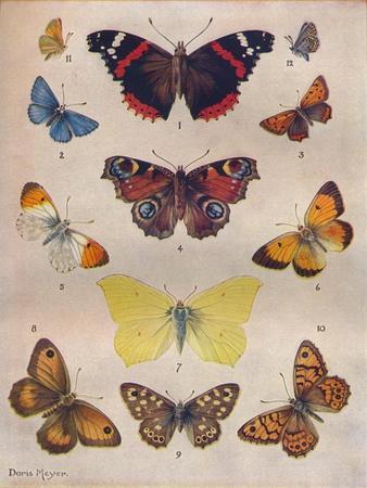 https://imgc.allpostersimages.com/img/posters/beautiful-butterflies-of-the-british-isles-c1934_u-L-Q1EF94Q0.jpg?artPerspective=n