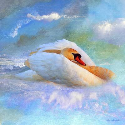 https://imgc.allpostersimages.com/img/posters/beautiful-swan-2a_u-L-Q1CQLPE0.jpg?artPerspective=n