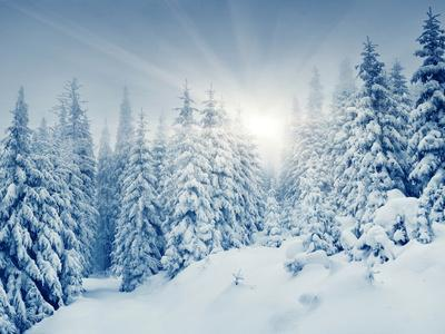 https://imgc.allpostersimages.com/img/posters/beautiful-winter-landscape-with-snow-covered-trees_u-L-Q105HU30.jpg?artPerspective=n