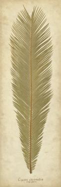 Sago Palm I by Becky Davis