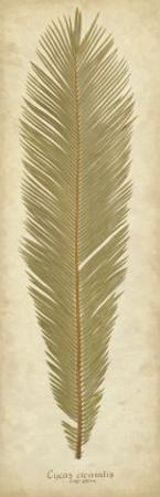 Sago Palm II by Becky Davis