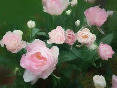 https://imgc.allpostersimages.com/img/posters/bed-of-roses-2018_u-L-Q1GTUVR0.jpg?artPerspective=n