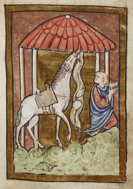 St. Cuthbert's Horse Pulls Down Bread and Meat by Bede
