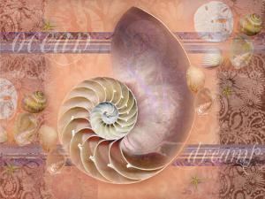 Ocean Shell by Bee Sturgis