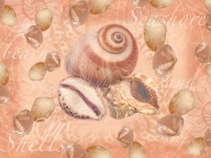 Shells on Shore by Bee Sturgis