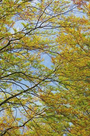 https://imgc.allpostersimages.com/img/posters/beech-forest-fagus-sylvatica-in-autumn-colors-triglav-national-park-slovenia_u-L-PZPSYP0.jpg?p=0