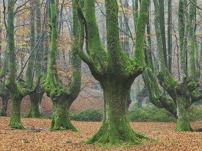 https://imgc.allpostersimages.com/img/posters/beech-forest-in-the-gorbea-nature-reserve-foliage-moss-brook-the-basque-provinces-spain_u-L-Q11YX210.jpg?p=0