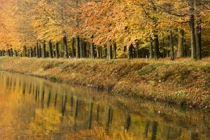 Beech Trees Autumn Colours Along River Bank
