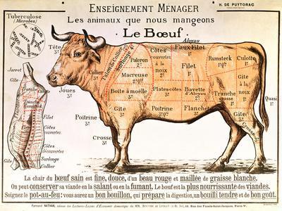 Butcher chart American Beef cut cow print vintage etching print