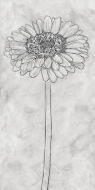 Chalky Gerbera by Belle Poesia