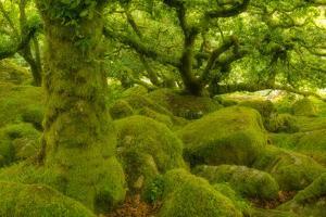 Stunted Oak Woodland Covered in Moss, Wistman's Wood, Devon, UK by Ben Hall