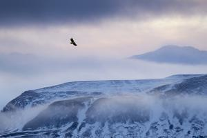 White-Tailed Eagle (Haliaeetus Albicilla) in Flight over Mountain Landscape at Dusk by Ben Hall