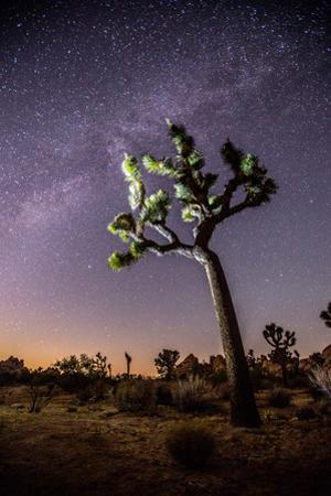 A Joshua Tree under the Milky Way by Ben Horton