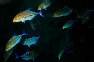 A School of Jackfish by Ben Horton