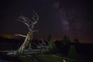 California: A Bristlecone Pine and the Milky Way by Ben Horton