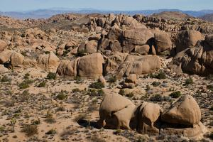 Hikers in Joshua Tree National Park by Ben Horton