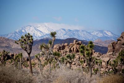 Joshua Trees and Snow Covered Mountains in Southern California by Ben Horton