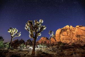 Joshua Trees Beneath the Stars by Ben Horton