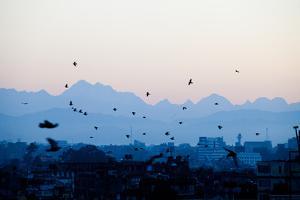 Kathmandu, Nepal: Birds Take Flight at Sunrise with the Himal Ganesh as a Backdrop by Ben Horton