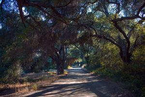 Oak Trees Shade a Dirt Road by Ben Horton