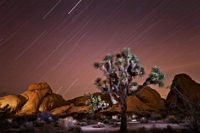 Star Trails over Joshua Trees and Granite Formations in the Desert by Ben Horton