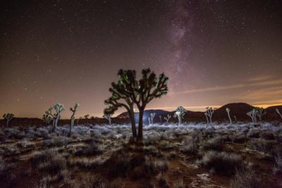 Stars and the Milky Way over a Joshua Tree in Joshua Tree National Park. by Ben Horton