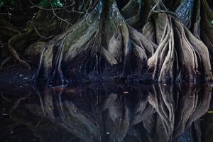 Tree Roots Descend into Rio Sirena by Ben Horton