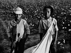 African American Children - Are Cotton Pickers Pulling Sacks Along Behind Them as They Pick Cotton by Ben Shahn