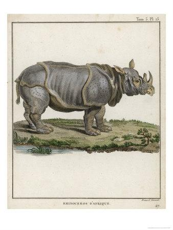 Fine Early Engraving of an African Rhinoceros