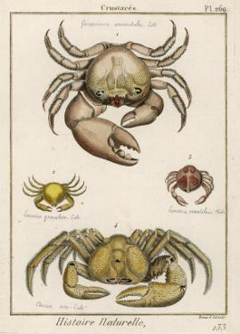 Gecarcinus Anisochele and Other Crabs by Benard