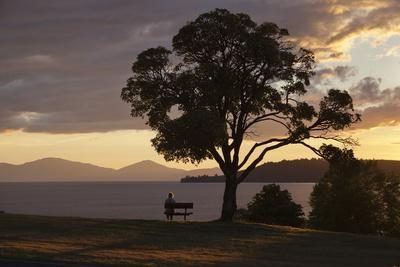https://imgc.allpostersimages.com/img/posters/bench-and-tree-overlooking-lake-taupo-taupo-north-island-new-zealand-pacific_u-L-PQ8QSZ0.jpg?p=0