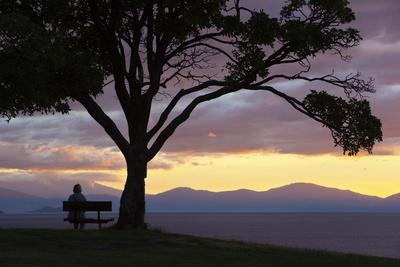 https://imgc.allpostersimages.com/img/posters/bench-and-tree-overlooking-lake-taupo-taupo-north-island-new-zealand-pacific_u-L-PQ8QTB0.jpg?p=0