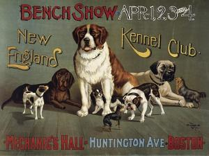 Bench Show, New England Kennel Club