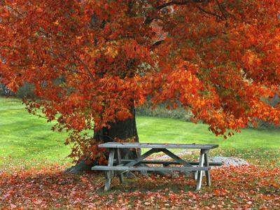 https://imgc.allpostersimages.com/img/posters/bench-under-maple-in-autumn-west-park-new-york-city-usa_u-L-PN6RSK0.jpg?p=0
