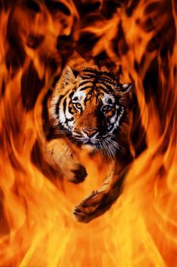 Bengal Tiger Jumping Flames
