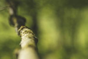 Branch, medium close-up, Bokeh by Benjamin Engler