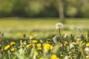 Flower meadow by Benjamin Engler